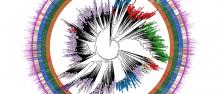 Human Microbiome Tree of Life