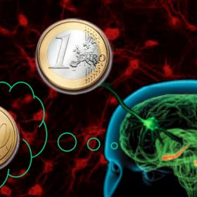Due pesi e due misure per il cervello ©DorisPischedda