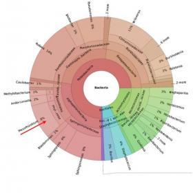 identificazione dei microrganismi nelle acque